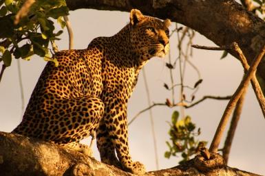 Ruaha, Tanzania