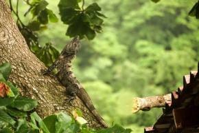 Montezuma, Costa Rica